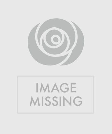 Birds of Paradise Tropical Foliage Arrangement delivered Baton Rouge, LA