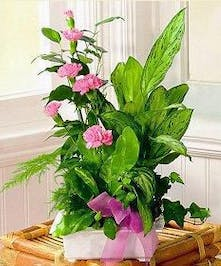 assorted green plants with flowers delivered baton rouge LA