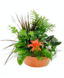 Ceramic planter filled with Tropical foliage and blooms.