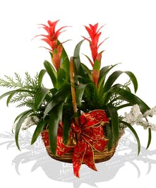 tropical blooming bromeliad plant delivered baton rouge LA