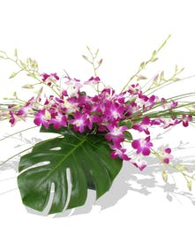 tropical dendrobium orchids delivered baton rouge LA