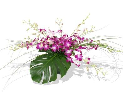 tropical dendrobium orchids delivered baton rouge LA