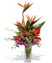 Tropical Ginger Birds of Paradise and Anthurium Arrangement delivered baton rouge,  LA