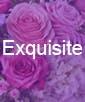 Exquisite