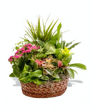 The European Garden Basket