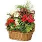 European Holiday Garden Basket (Shown)