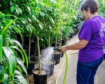 A longtime employee waters plants in the greenhouse